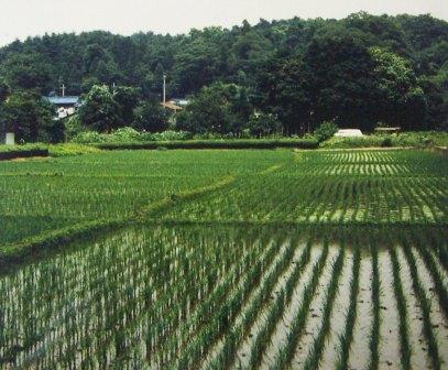 大鐘の水田 所沢市ホームページ